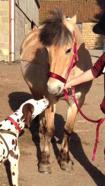 Max kisses pony