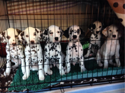Puppies crate